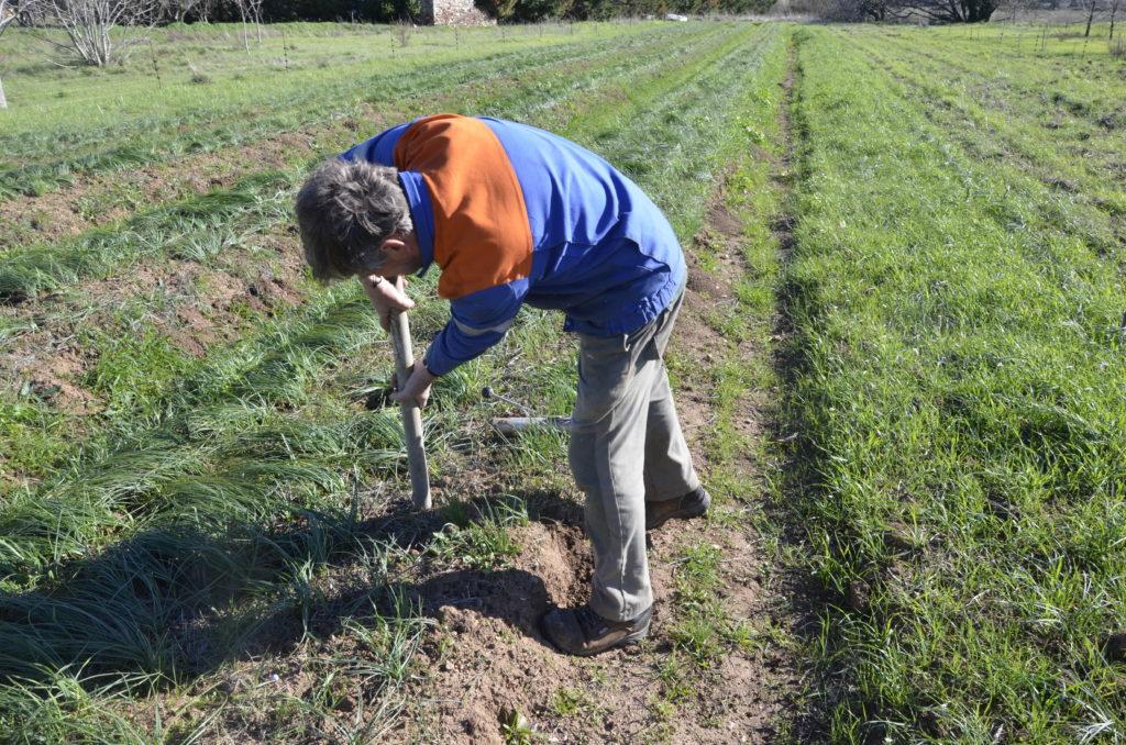 Frédéric enfonce le tuyau pour faire un trou dans lequel le piège sera posé.